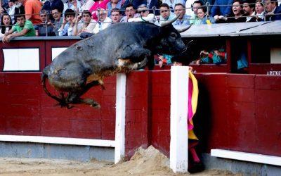 Madrid: 27ª de San Isidro – Un Miura salta al callejón
