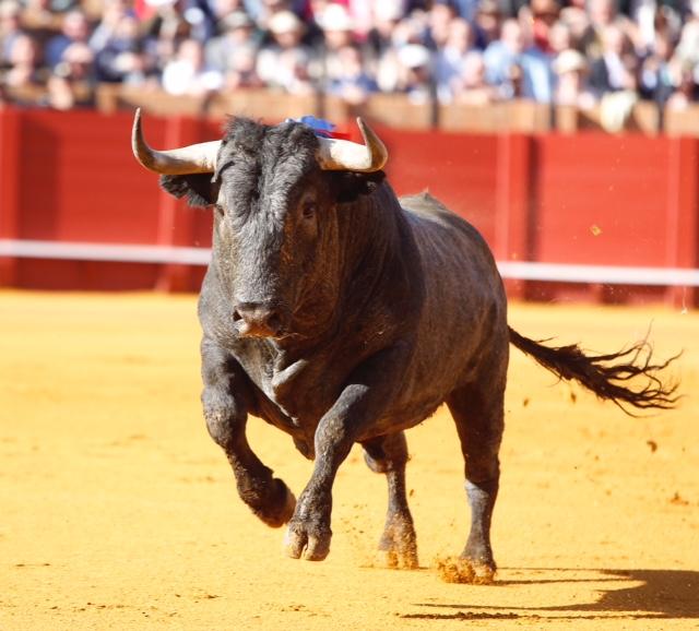 No todos son Cobradiezmos ni salen en Sevilla