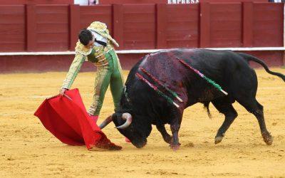 Bullicioso, de Fuente Ymbro, gana el Desafío Cuidad de Málaga